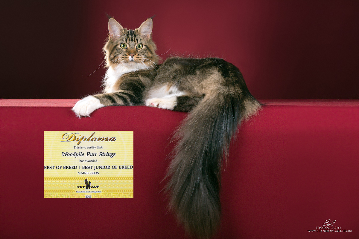 What's New at Woodpile Maine Coons